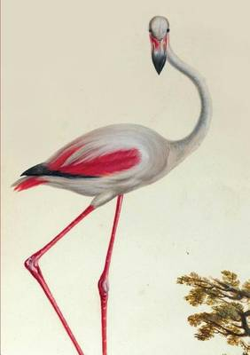Carnet Blanc, Flamant Rose - Bnf Animaux (Paperback)