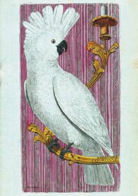Carnet Blanc, Kakato�s, Dessin 18e Si�cle - Bnf Animaux (Paperback)