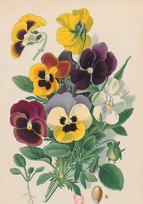 Carnet Blanc, Pens�es, Dessin 19e Si�cle - Bnf Botanique (Paperback)