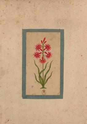 Carnet Blanc, Fleur 1, Miniature Indienne 18e Si�cle - Bnf Botanique (Paperback)