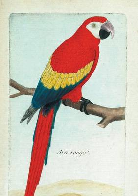 Carnet Blanc, Ara Rouge, Dessin 18e Si�cle - Bnf Animaux (Paperback)