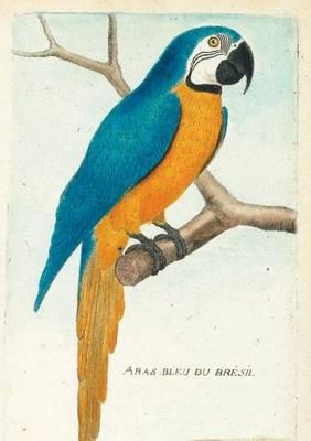 Carnet Blanc, Ara Bleu, Dessin 18e Si�cle - Bnf Animaux (Paperback)