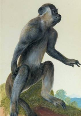 Carnet Lign�, Macaque - Bnf Animaux (Paperback)