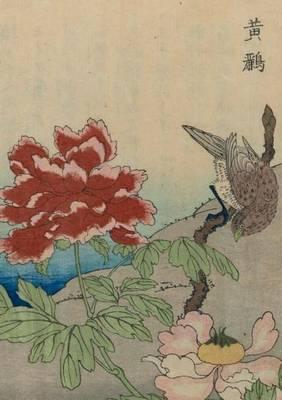 Carnet Lign�, Oiseaux �trangers - Bnf Animaux (Paperback)