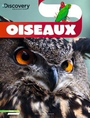 Discovery Education: Oiseaux (Paperback)