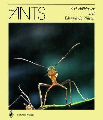 The Ants (Hardback)