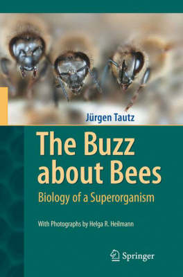 The Buzz about Bees: Biology of a Superorganism (Hardback)