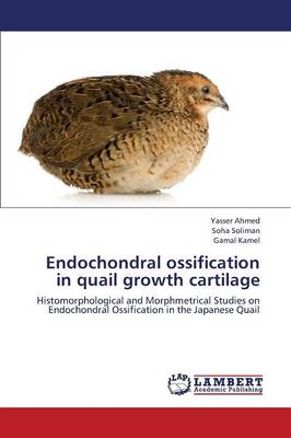 Endochondral Ossification in Quail Growth Cartilage (Paperback)