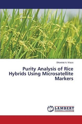 Purity Analysis of Rice Hybrids Using Microsatellite Markers (Paperback)