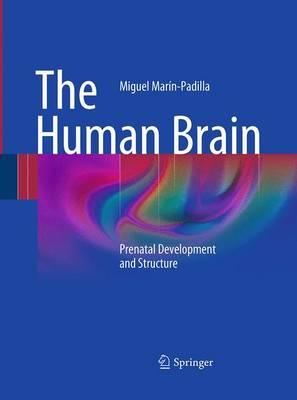 The Human Brain: Prenatal Development and Structure (Paperback)