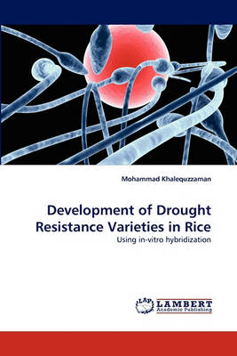 Development of Drought Resistance Varieties in Rice (Paperback)