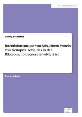 Interaktionsanalyse Von Brix, Einem Protein Von Xenopus Laevis, Das in Der Ribosomenbiogenese Involviert Ist (Paperback)