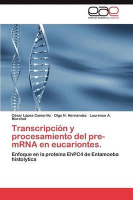Transcripcion y Procesamiento del Pre-Mrna En Eucariontes. (Paperback)