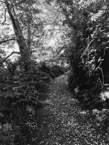 Robert Adams: An Old Forest Road (Hardback)