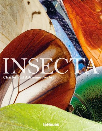 Insecta (Hardback)