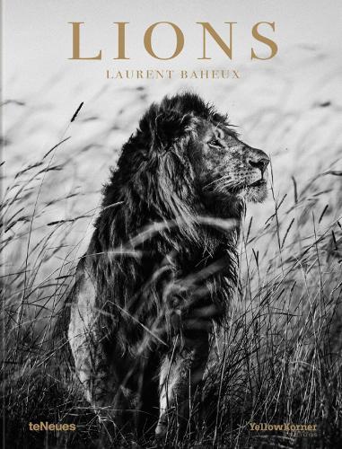 Lions (Hardback)