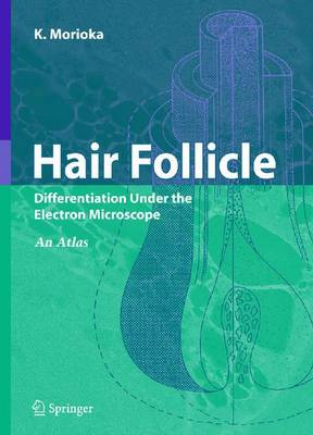 Hair Follicle: Differentiation under the Electron Microscope - An Atlas (Paperback)