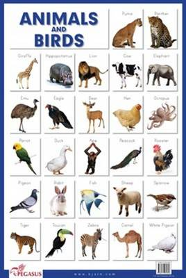Animals and Birds (Poster)