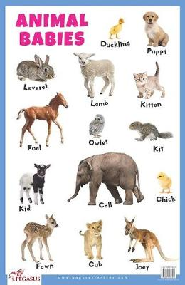 Animal Babies Educational Chart (Poster)