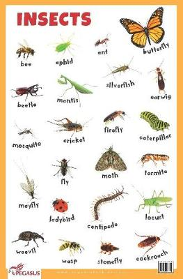 Insects Educational Chart (Poster)