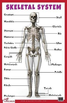 Skeletal System Educational Chart (Poster)