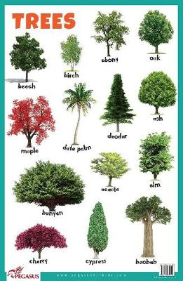Trees Educational Chart (Poster)