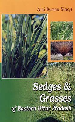 Sedges and Grasses: of Eastern Uttar Pradesh (Hardback)
