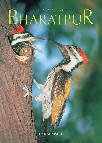 Birds of Bharatpur (Hardback)