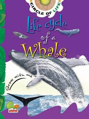 Life Cycle of a Whale: Key stage 1 - Circle of Life (Paperback)