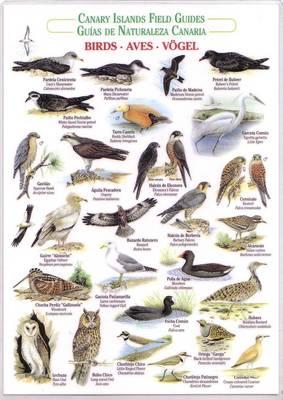 Birds (Waterproof Field Guide) - Canary Islands Field Guides (Bath book)