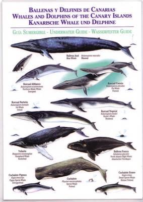 Whales and Dolphins of the Canary Islands / Ballenas y Delfines de Canarias / Kanarische Whale und Delphine - Canary Islands Field Guides (Bath book)