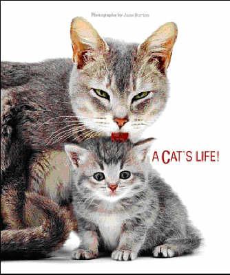 Cat's Life (Hardback)
