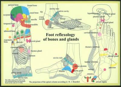 Foot Reflexology of Bones & Glands (Poster)