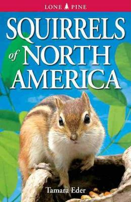 Squirrels of North America (Paperback)