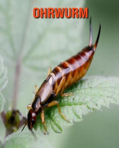 Ohrwurm: Erstaunliche Fakten & Bilder (Paperback)
