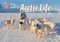 Arctic Life: Band 04/Blue - Collins Big Cat (Paperback)