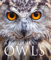 A Parliament of Owls (Hardback)