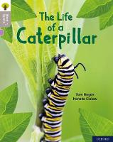 Oxford Reading Tree Word Sparks: Level 1: The Life of a Caterpillar - Oxford Reading Tree Word Sparks (Paperback)