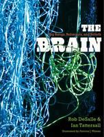The Brain: Big Bangs, Behaviors, and Beliefs (Hardback)