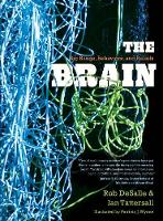 The Brain: Big Bangs, Behaviors, and Beliefs (Paperback)