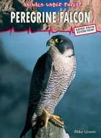 Peregrine Falcon - Animals Under Threat (Paperback)
