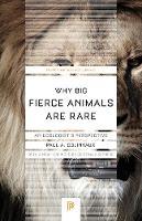 Why Big Fierce Animals Are Rare