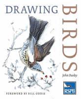 Drawing Birds - RSPB (Paperback)