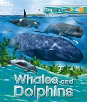 Explorers: Whales and Dolphins - Explorers (Paperback)