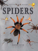 Spiders - Nature Watch (Hardback)