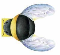 Little Bee: Mini Creatures (Hardback)