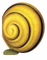 Little Snail: Mini Creatures (Hardback)