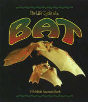 The Life Cycle of the Bat (Paperback)