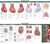 Anatomical Chart Company's Illustrated Pocket Anatomy: Anatomy of The Heart Study Guide - Anatomical Chart Company's Illustrated Pocket Anatomy