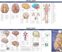 Anatomical Chart Company's Illustrated Pocket Anatomy: Anatomy of The Brain Study Guide - Anatomical Chart Company's Illustrated Pocket Anatomy